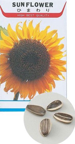 花の種 ヒマワリ 苗床付 2741