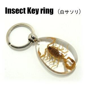 Insect Keyring【白サソリ】SK0901 キーホルダー/昆虫/アクセサリーパーツ/ペンダントトップにも/ストラップ/海外雑貨/キーリング/キーチャーム/レジン/樹脂