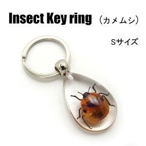 ミニミニInsect Keyring 【カメムシ(SSサイズ)】SD09025 キーホルダー/昆虫/アクセサリーパーツ/ペンダントトップにも/ストラップ/海外雑貨/キーリング/キーチャーム/レジン/樹脂