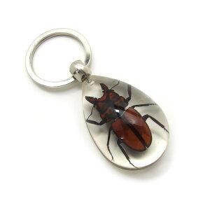 Insect Keyring【クワガタA】SK5710 キーホルダー/昆虫/アクセサリーパーツ/ペンダントトップにも/ストラップ/海外雑貨/キーリング/キーチャーム/レジン/樹脂