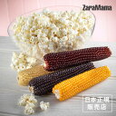 ZaraMama ザラママ ポップアコブ ポップコーン Popcorn ※返品・交換不可