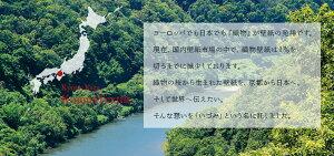壁紙織物壁紙日本製京都いづみKYOTOIZUMIirodori彩巾93cm×長さ12m貼ってはがせる壁紙フリース壁紙不織布壁紙はがせる賃貸diyおしゃれ