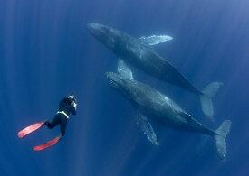 絵画風 壁紙ポスター (はがせるシール式) ダイビング クジラ スキューバ ダイバー 深海 海 キャラクロ DVG-005A2 (A2版 594mm×420mm) 建築用壁紙+耐候性塗料 インテリア