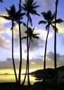 絵画風 壁紙ポスター (はがせるシール式) ハワイ オアフ島の夜明けとパームツリー サンライズ ヤシの木 キャラクロ …