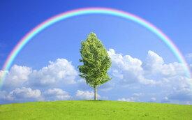絵画風 壁紙ポスター (はがせるシール式) 虹と空と雲と緑のハーモニー レインボーアーチ 虹 キャラクロ SRBW-003W2 (ワイド版 603mm×376mm) 建築用壁紙+耐候性塗料 インテリア