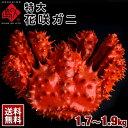 ≪特大サイズ≫花咲蟹 花咲ガニ(姿) 1.7〜1.9kg前後 最高品質 堅蟹 身入り抜群のオス市場に出回らない大きさで食べ応…