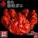 ≪真っ赤に輝く幻の蟹≫超特大 花咲蟹 花咲ガニ 1.5kg前後 最高品質 冷凍市場に出回らない大きさで食べ応え抜群!味の…