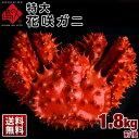≪真っ赤に輝く幻の蟹≫超特大 花咲蟹 花咲ガニ 1.8kg 最高品質 冷凍市場に出回らない大きさで食べ応え抜群!味の濃厚…