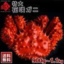≪真っ赤に輝く幻の蟹≫特大 花咲蟹 花咲ガニ 900g-1.1kg 最高品質 堅蟹 身入り抜群のオス市場に出回らない大きさで食べ応え抜群!味の濃厚さは蟹の中で1番 かに カニ 蟹 プレゼント グルメ