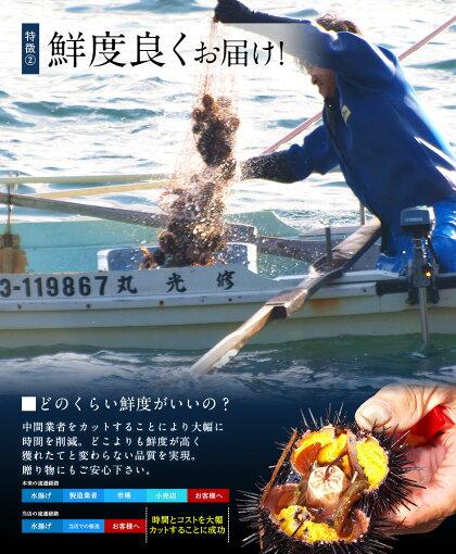 【今が旬の最盛期】うにウニ生キタムラサキウニ90g日本最北の島北海道礼文・利尻島産【配達日指定不可】雲丹無添加塩水パック塩水ウニギフトグルメ食品寿司贈り物還暦祝いお取り寄せミョウバン未使用生うに