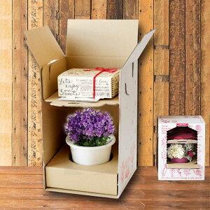 【OK!】ボタニカルギフトトレイ付カートンBOX 2段タイプ <30×24×24cm>ご出産祝 内祝 御結婚祝 御祝 誕生日 プレゼント ギフト