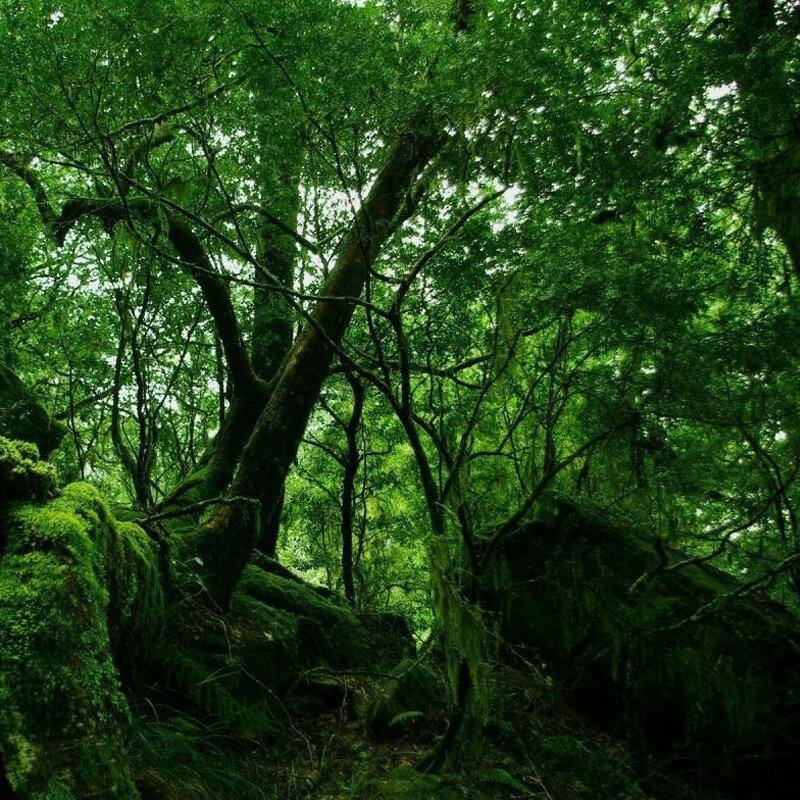 すっきりとした深緑の香り。レインフォレスト -Rainforest-10mlハイグレード アロマクラフト用 フレグランスオイル(手作り石鹸 香水 キャンドル バスボム サシェ / ディフューザー 加湿器 ネブライザー用)