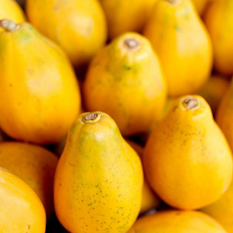 ココナッツベースの甘い香り。ココマンゴ&パパイヤ -Cocomango & Papaya-10mlハイグレード アロマクラフト用 フレグランスオイル(手作り石鹸 香水 キャンドル バスボム サシェ / ディフューザー 加湿器 ネブライザー用)