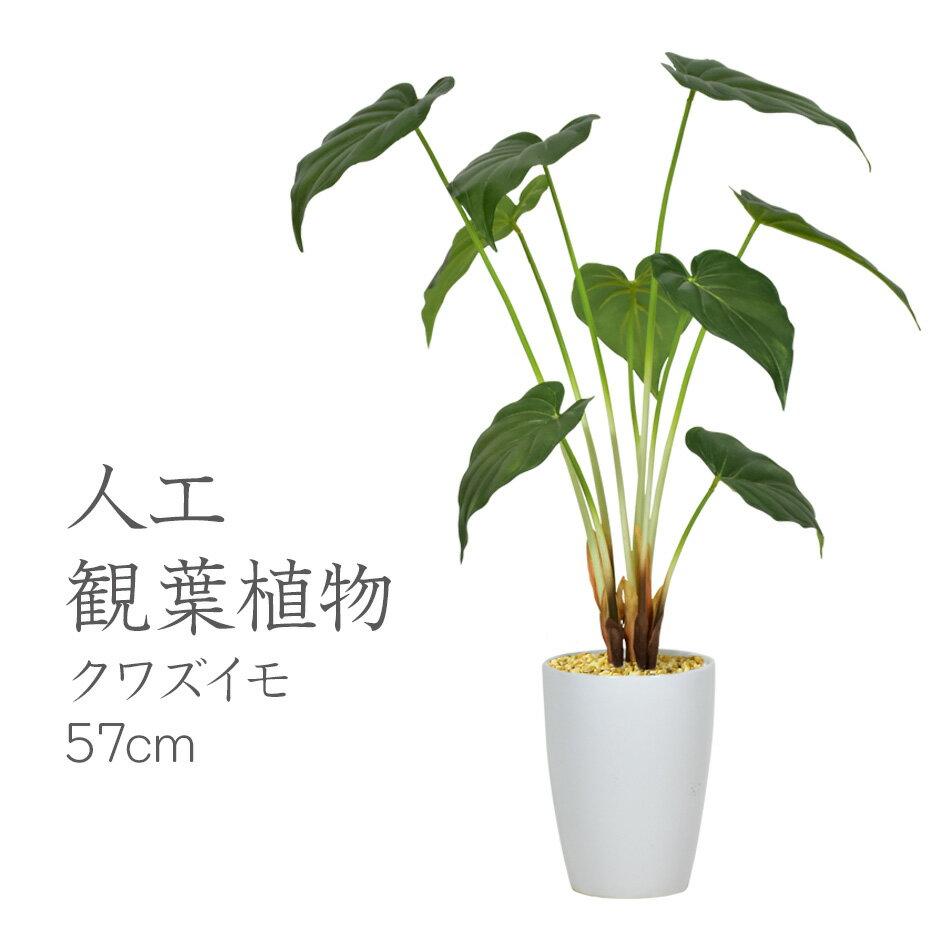 【送料無料】人工観葉植物 光触媒 クワズイモ57cm 水やり不要 高さ57 インテリアグリーン 観葉植物 造花 【クワズイモ57cm】