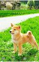 【中古】天国の犬ものがたり−ラストレター− / 堀田敦子