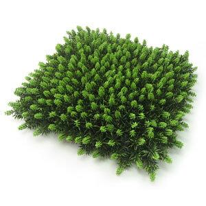 【人工植物】杉苔マット 26×26