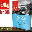 【20%OFFキャンペーン中!!】オリジン [Orijen] 6フィッシュ ドッグ 5.9kg オリジンジャパン ▽o ペット フード 犬 ド…
