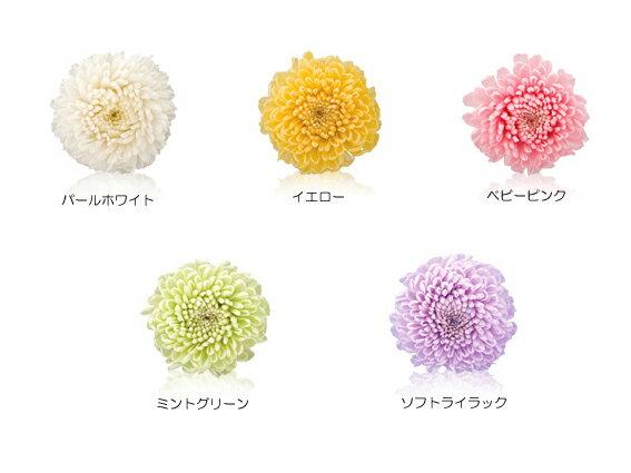フレッシュルック ピンポンマム フロールエバー[florever] 1輪 10%オフ【プリザーブドフラワー】 【花材】【単品】【ハーバリウム】