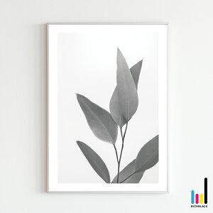 ウィローユーカリ モノトーン ポスター [ A2 ]ユーカリ 北欧 北欧風 北欧インテリア 北欧テイスト 雑貨 モノクロ 白黒 ドライフラワー フラワー シンプル 自然 写真 プリント フレーム ナチュ