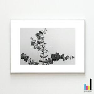 ユーカリ モノトーン プリント ポスター [ A4 ]北欧 北欧風 北欧インテリア 北欧テイスト ポポラス 玄関 トイレ 雑貨 モノクロ 白黒 ドライフラワー シンプル 写真 フレーム ナチュラル カフェ
