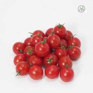 国産 減農薬 ミニトマト プチトマト 200g完熟 赤