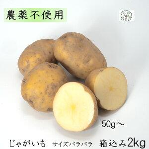 訳あり 泥付き国産 じゃがいも サイズばらばら 箱込2kg 無農薬 野菜 自然栽培 送料無料 買い置き