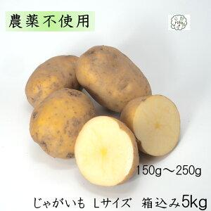 訳あり 泥付き 国産 じゃがいも Lサイズ 箱込5kg 無農薬 野菜 自然栽培 送料無料 買い置き