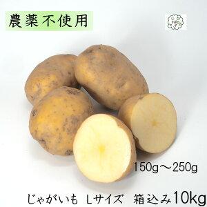 訳あり 泥付き国産 じゃがいも Lサイズ 箱込10kg 無農薬 野菜 自然栽培 送料無料 買い置き