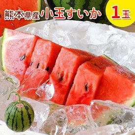 スイカ 小玉 1玉 熊本 スイカ王国 熊本県産 小玉スイカ 1玉 送料無料