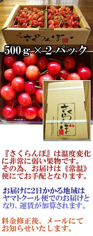 数量限定250箱!山形県産さくらんぼ「佐藤錦」秀品Lサイズ1kg(500g×2)