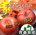 【予約商品】青森県産サンつがる訳あり5kg詰(約14〜23玉入)※発送は9月11日から開始予定!