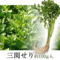 【産地直送/同梱におすすめ】三関セリ(約100g/約50g×2束)