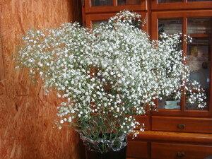 花束に添えてボリュームアップ!かすみ草