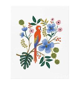 アートプリント 【Lサイズ】【Macaw】【マコーインコ】 ポスター 北欧 インテリア 西海岸 カフェ フロリダ フレーム riflepaper annna bond