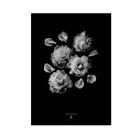 【200円★クーポン配布中】 Coco Lapine design ポスター 北欧 【ココラパンデザイン】Paeonia Officinalis 芍薬 シャクヤク 花 シンプル カフェ モノトーン アートプリント 50x70cm インテリア