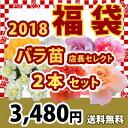 2018 福袋 バラ苗 2年大株苗店長セレクト 2本セット4号鉢【送料無料】