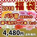 2018 福袋 バラ苗 2年大株苗店長セレクト 選べるカラー 2本セット4号鉢【送料無料】