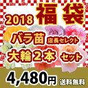 2018 福袋 バラ苗 2年大株苗店長セレクト 大輪 2本セット4号鉢【送料無料】