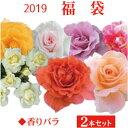 2019 福袋 バラ苗 2年大株苗店長セレクト 香りバラ 2本セット4号鉢【送料無料】