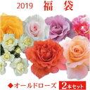 2019 福袋 バラ苗 2年大株苗店長セレクト オールドローズ 2本セット4号鉢【送料無料】