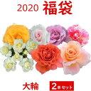 2020 福袋 バラ苗 2年大株苗店長セレクト 大輪 2本セット4号鉢【送料無料】