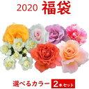 2020 福袋 バラ苗 2年大株苗店長セレクト 選べるカラー 2本セット4号鉢【送料無料】