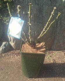 【苗の別注文が必要です】バラ栽培スタートセット 「バラ楽々」《オリジナル6号鉢・土・肥料・マットのセット》【「バラ楽々」のみのご注文は不可】