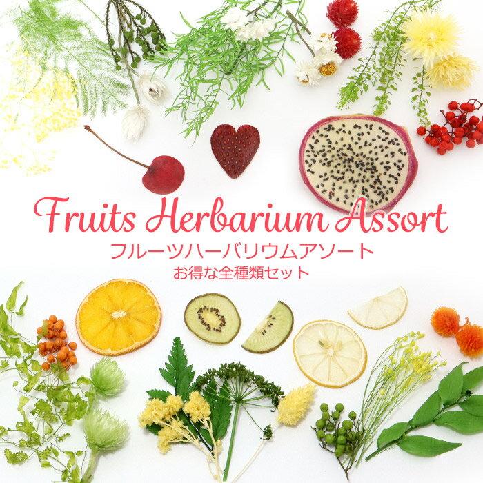 フルーツポンチみたいなフルーツハーバリウムアソート 花材のみ お得な全種類セット