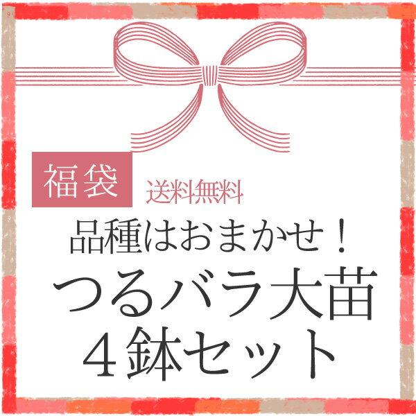 【2018福袋】 品種はおまかせ! つるバラ大苗4鉢 /同梱不可/順次配送 バラ苗
