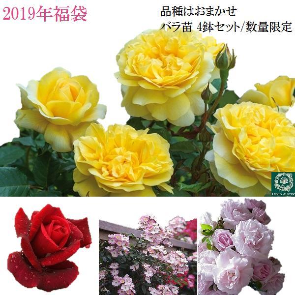 【2019福袋】 品種はおまかせ! イングリッシュローズ1鉢つるバラ2鉢 四季咲きバラ1鉢の4鉢セット /同梱不可/順次配送 バラ苗