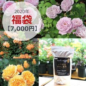 【2020福袋】何が届くかお楽しみ!イングリッシュローズ, Rose for You バラ苗 計2鉢 ぼかし肥料1kg 1袋/順次配送