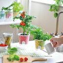 キッチンで楽しく育てよう 野菜栽培キット【べジフィール】 底面給水システムで種から簡単に野菜を栽培。ギフトにも喜ばれます。 【ギフト対応】【野菜 種 栽培キット...