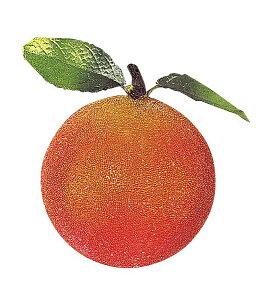 80mm フロストオレンジ(6個入り) 食品サンプル フルーツ 果物 [DIFV6751]【オレンジ みかん フェイク フルーツ 商品 サンプル 作り物 レプリカ モチーフ】