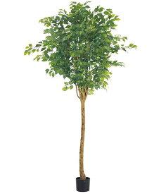 人口観葉植物 大型 210cm ラウンドフィカスツリー(ナチュラルトランク) 造花 観葉植物 [LETR7642] フェイク グリーン インテリア おしゃれ 代引決済不可